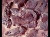 venison-blaeberry