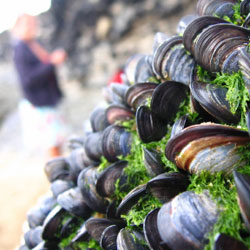 mussels-250px