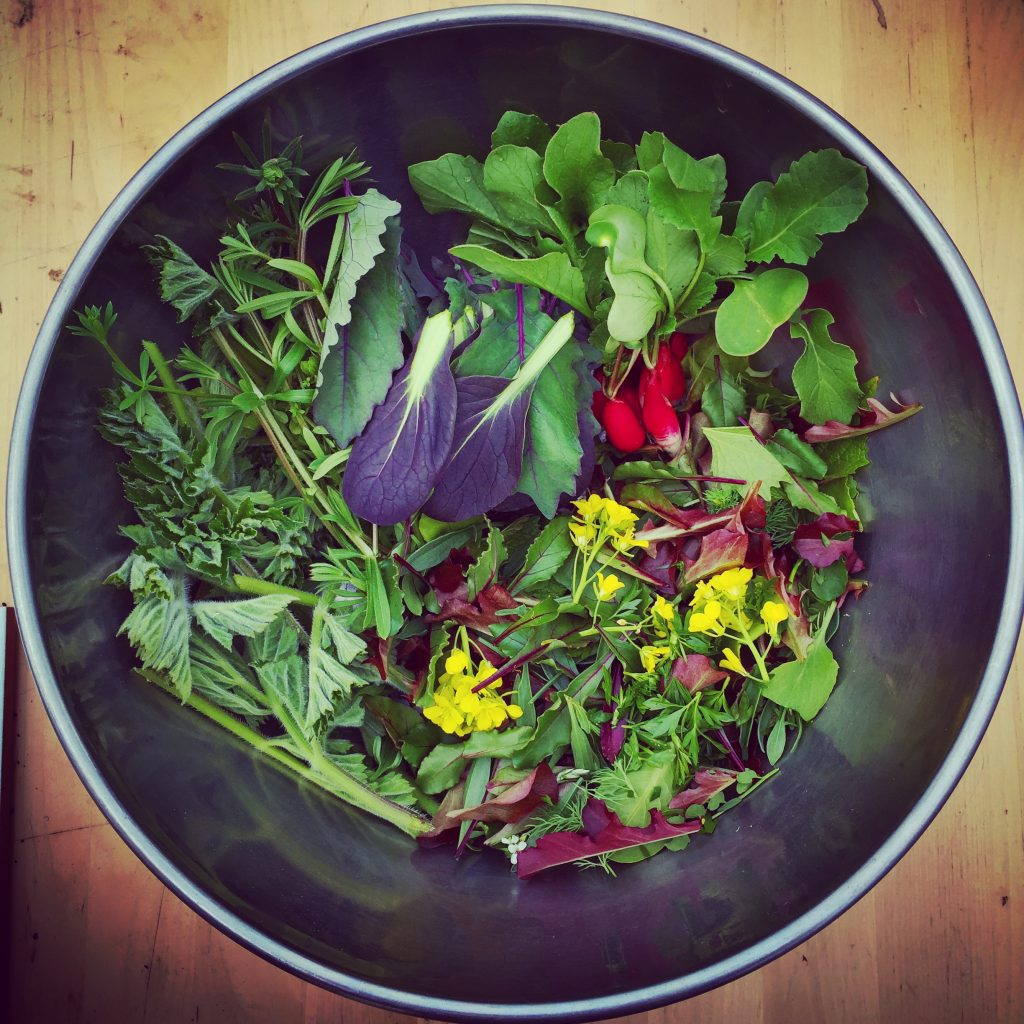 Home grown and wild salad and vegetables