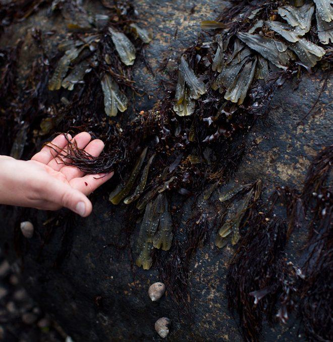slider-seaweed-rock