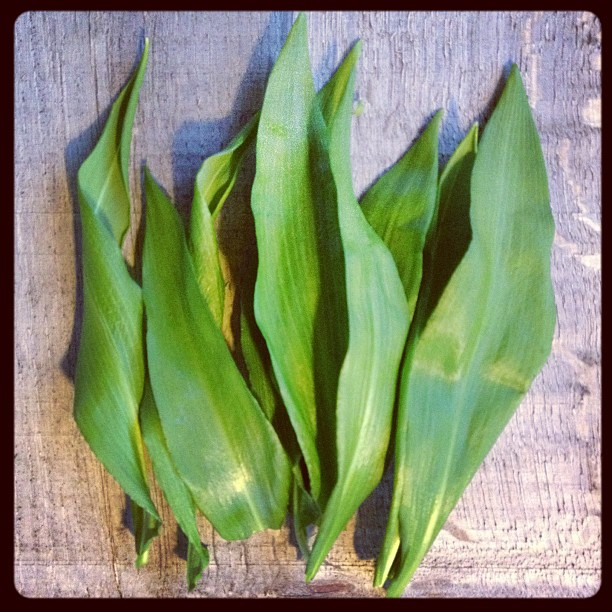 wild-garlic-leaves